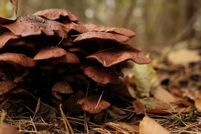 How to prevent tooth pain from bleeding fungus