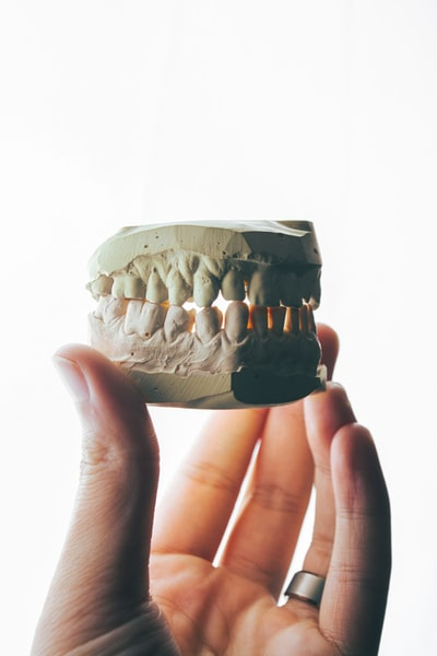 Tiger tooth tiger teeth used for facial reconstruction